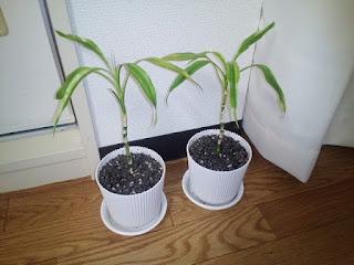 観葉植物の写真5