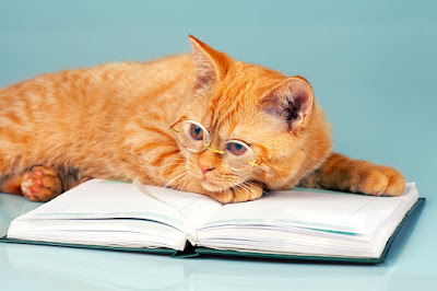 Ginger cat with book and glasses. via Storyblocks.