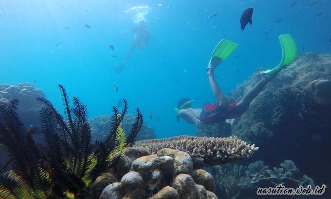 wisata opentrip pulau harapan