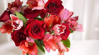 Ruže i tulipani slike besplatne HD pozadine za desktop free download hr