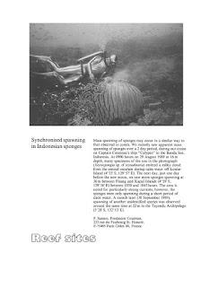 Sebuah dokumentasi riset Jacques Yves Cousteau di Banda Neira, spot antara Pulau Pisang, Sjahrir dan Pulau Neira, tanggal 29 Agustus 1989