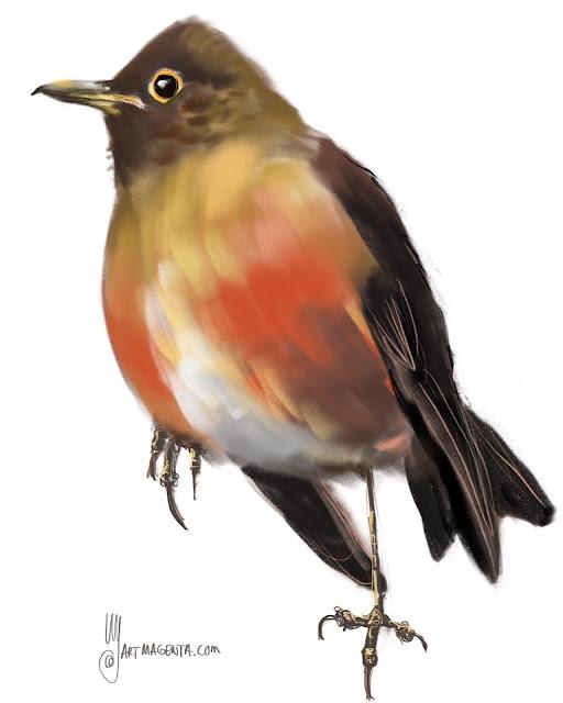 Trush bird painting by Artmagenta