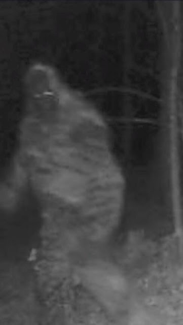 Trail Camera Bigfoot Suit