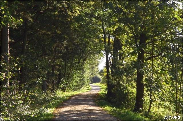 con đường tháng 9