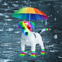El perro arcoíris sonríe en Cice bajo la lluvia