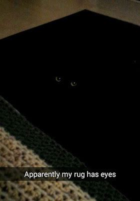 black cat sitting on black rug camouflage funny
