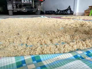 Jual Telur Jangkrik Lampung