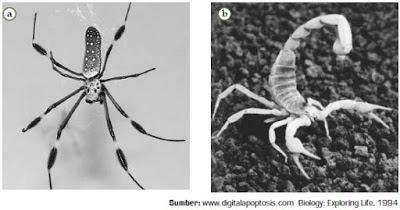 Klasifikasi Filum Arthropoda,  Contoh serta Ciri-Ciri Hewan dari Kelas Arachnida, Crustacea, Myriapoda, dan Insecta (Serangga)