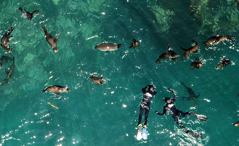 Snorkelling with Seals