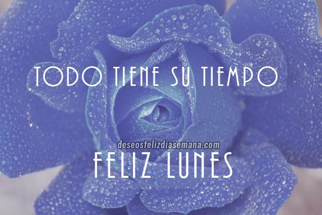 Saludos cortos del feliz lunes con imágenes de rosas y bonitas frases cristianas positivas por Mery Bracho