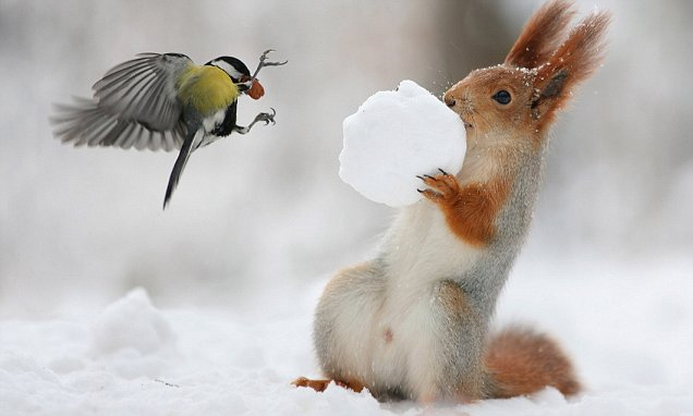 Squirrel Facts In Hindi