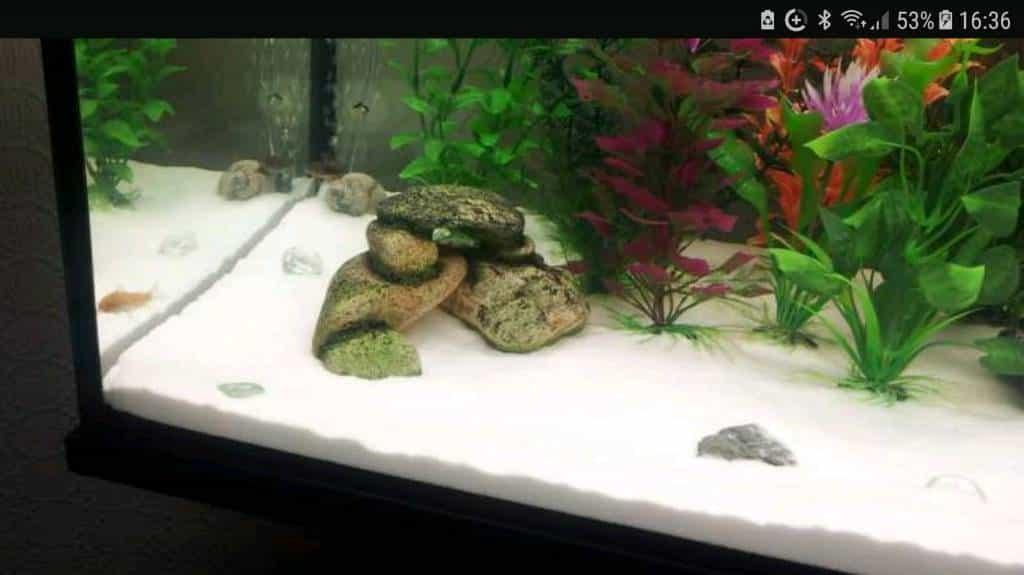 Harga Pasir Silika Aquarium Ady Water | Jual Pasir Silika ...