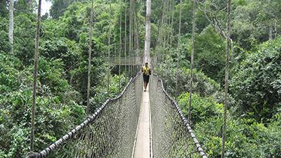 6. Canopy Walk, Ghana