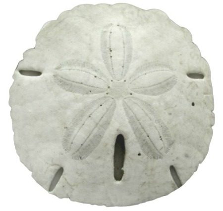 Sand Dollar Pillow Round