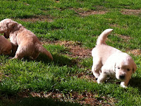 Preparing Your Home and Garden for a New Puppy