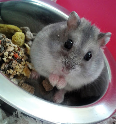 Russian dwarf hamster death pet grief