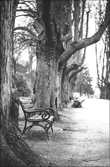 Rombergpark, Photowalk