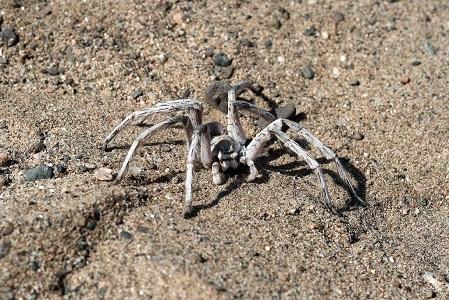 En Değişik 10 Örümcek Türü