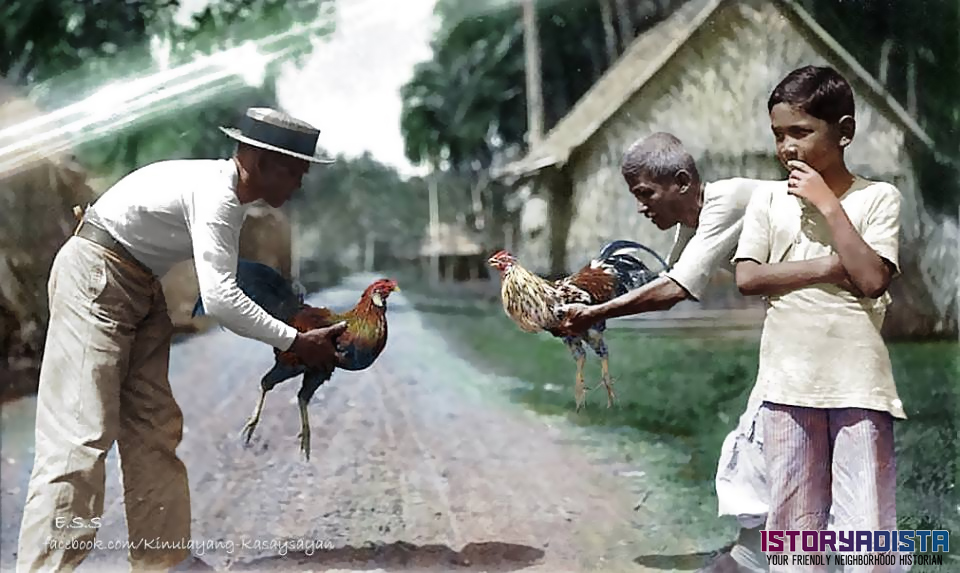 Preparing for a cockfight (c1904)