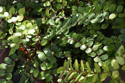 plants, foliage,