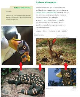Respuestas El hábitat y el nicho ecológico son dos conceptos en estrecha relación con el ecosistema ya que el hábitat es el lugar físico de un ecosistema donde viven especies adaptadas a las condiciones naturales, y el nicho ecológico es el modo en que un organismo se relaciona con los factores bióticos  y abióticos de su ambiente; esto es, las condiciones físicas, biológicas, químicas que un organismo requiere para vivir y reproducirse en el ecosistema:  luz, humedad, suelo, temperatura, clima, alimentación, depredadores, etcétera.  Biótico: Se refiere a lo característico o que está vinculado a los seres vivos. También es aquello perteneciente o relativo a la biota  (el conjunto de la flora y la fauna de una determinada región).  Abiótico: Se refiere al medio en el que no es posible la vida. Nombra lo que no forma parte o no es producto de los seres vivos.