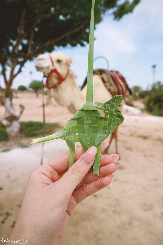 honeymoon, marrakesh, marrakech, morocco, camel riding, camel safari