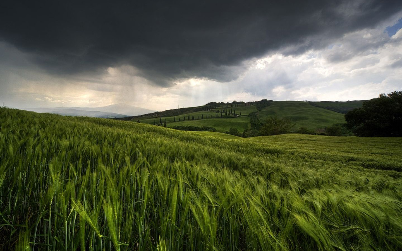 Chuva no Campo   Rain of Field