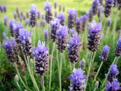 Biodiversidad plantas florales