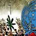 American Media Silent After UN Just Called for Decriminalizing Drug Use Worldwide