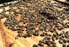 Θεραπεία της νοζεμίασης στα μελίσσια: Τι κάνουμε τώρα το Χειμώνα;