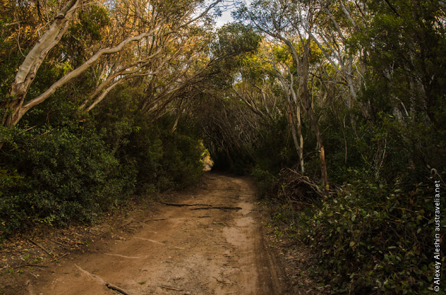 Tunnels of interwoven branches are very common in Little Dip Conservation Park
