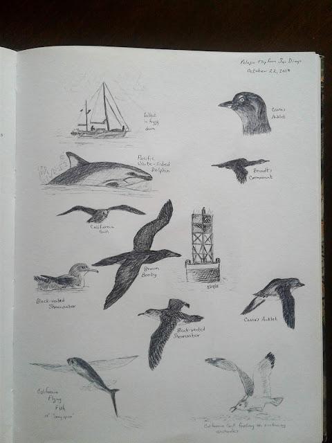 Pelagic trip nature journal sketches