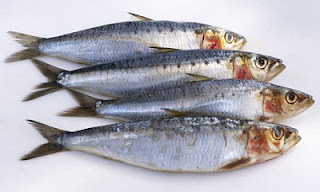 Image result for ikan sarden