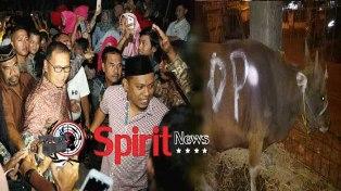 Walikota Makassar,Idul Adha 1438-h,Semua Kelurahan Berqurban