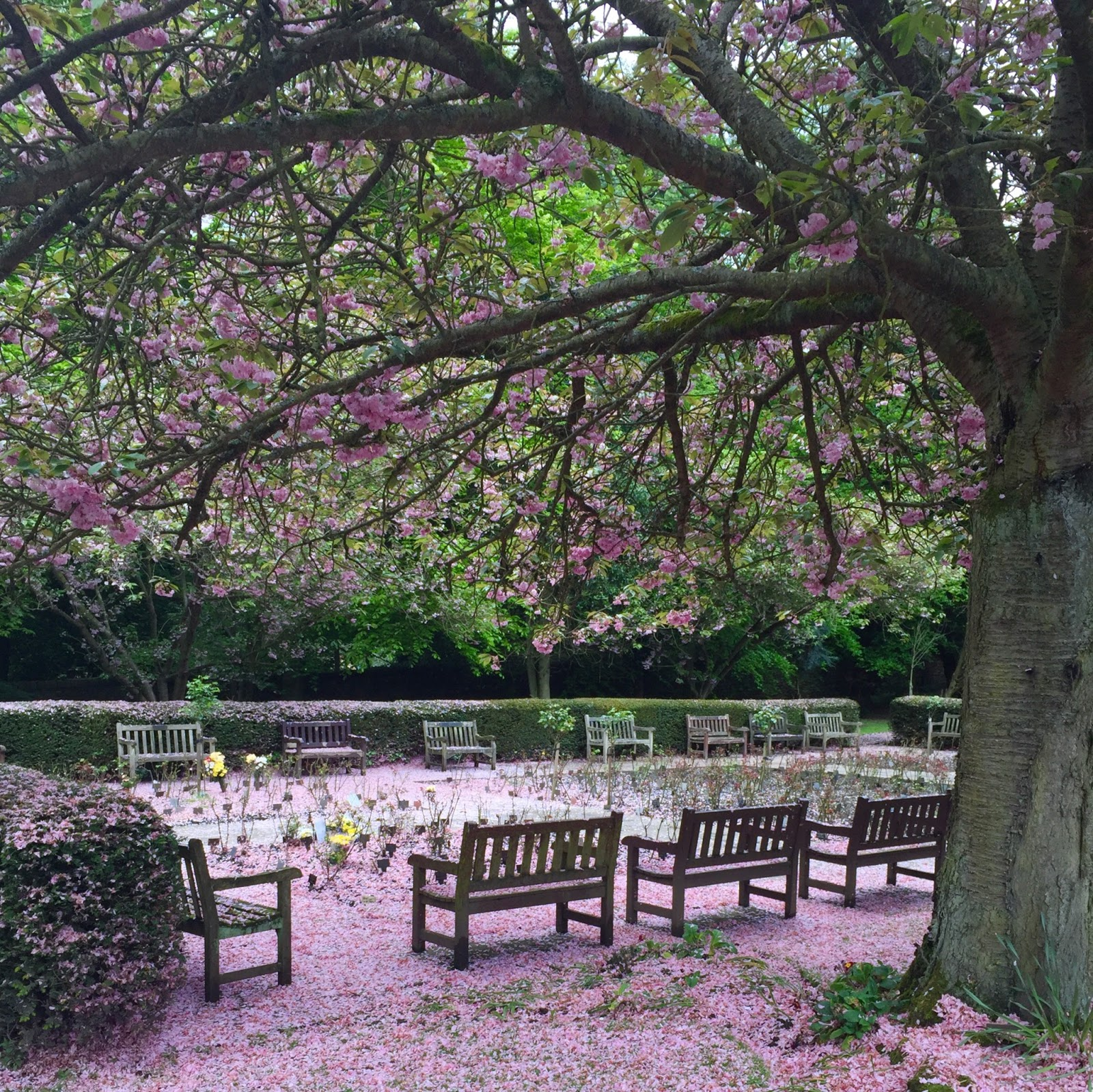 Benches, trees and blossom at Rawdon Crematorium