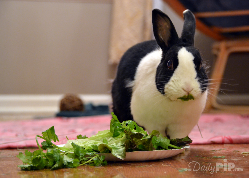 The top 10 reasons rescue rabbits rock and why you should adopt