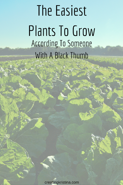 The Easiest Edible Plants To Grow According To Someone With A Black Thumb
