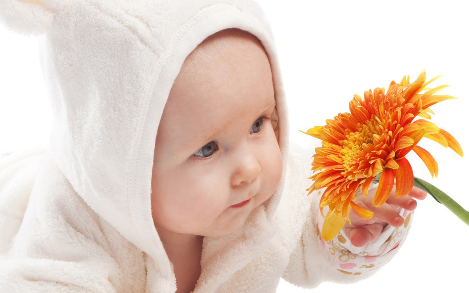 Cute Baby Cute Baby Boy And Beautiful Orange Color Flower Hd Wallpaper