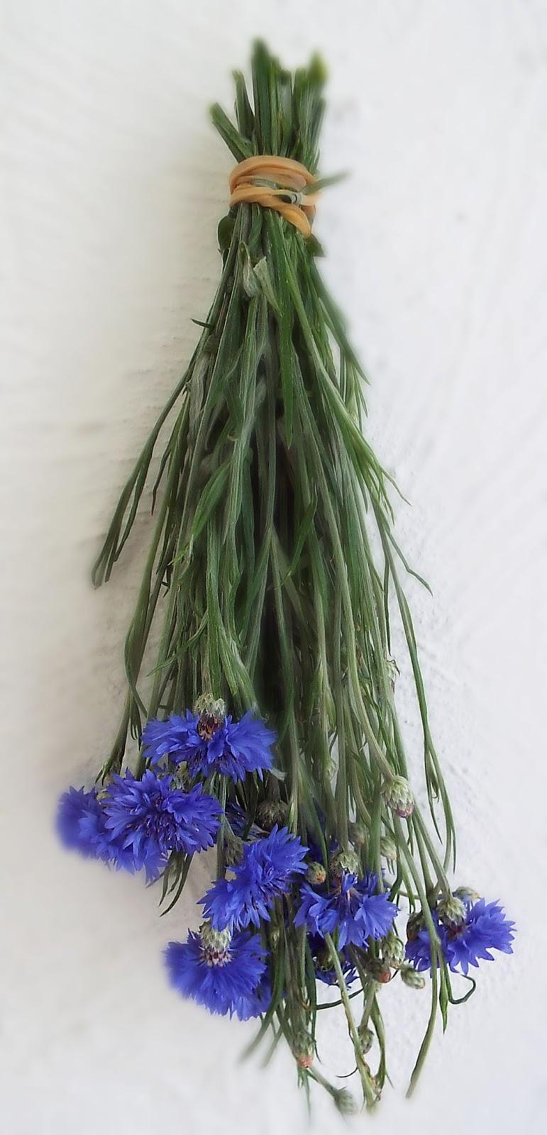 lisa scherer art cornflower bachelor u0027s buttons flower for crafts