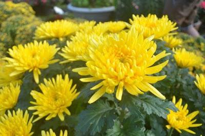 Shop hoa tươi Long Thành Đồng Nai giao hoa nhanh