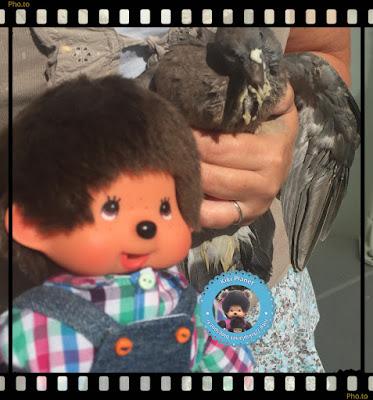 Bubbles le Monchichi et Colombine le bébé pigeon - pigeonneau -oisillon