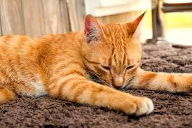 Cat Symptoms You Should Be Aware Of (Cat health problems)