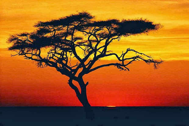 African Sunset Tree Painting