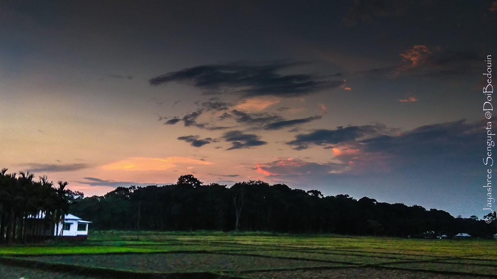 The rice field lightened by the dusky lights. @DoiBedouin
