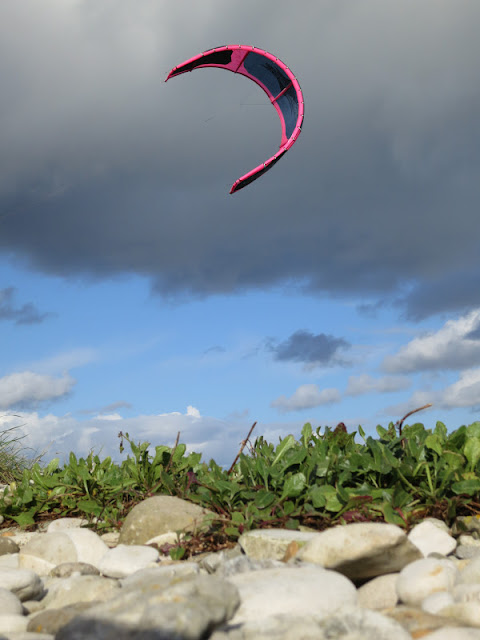 PInk and Blue surfing Kite above a line of plants on pebbles (Portland Harbour, Dorset)