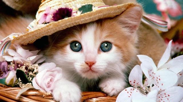 Hướng dẫn cách chăm sóc cho mèo