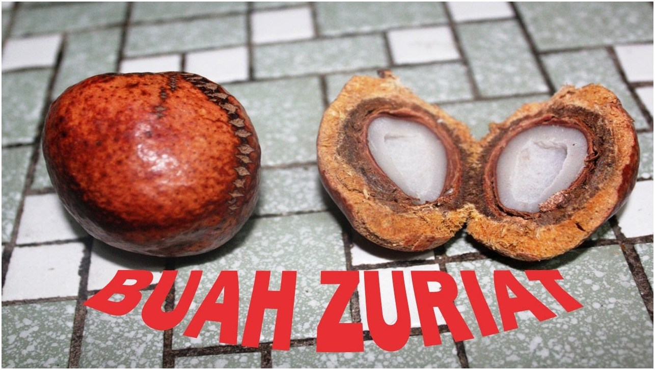Jual Buah Zuriat Original di Bukit Bakri Malaysia