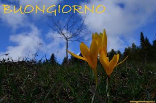 frasi di buongiorno, serdar yılmaz