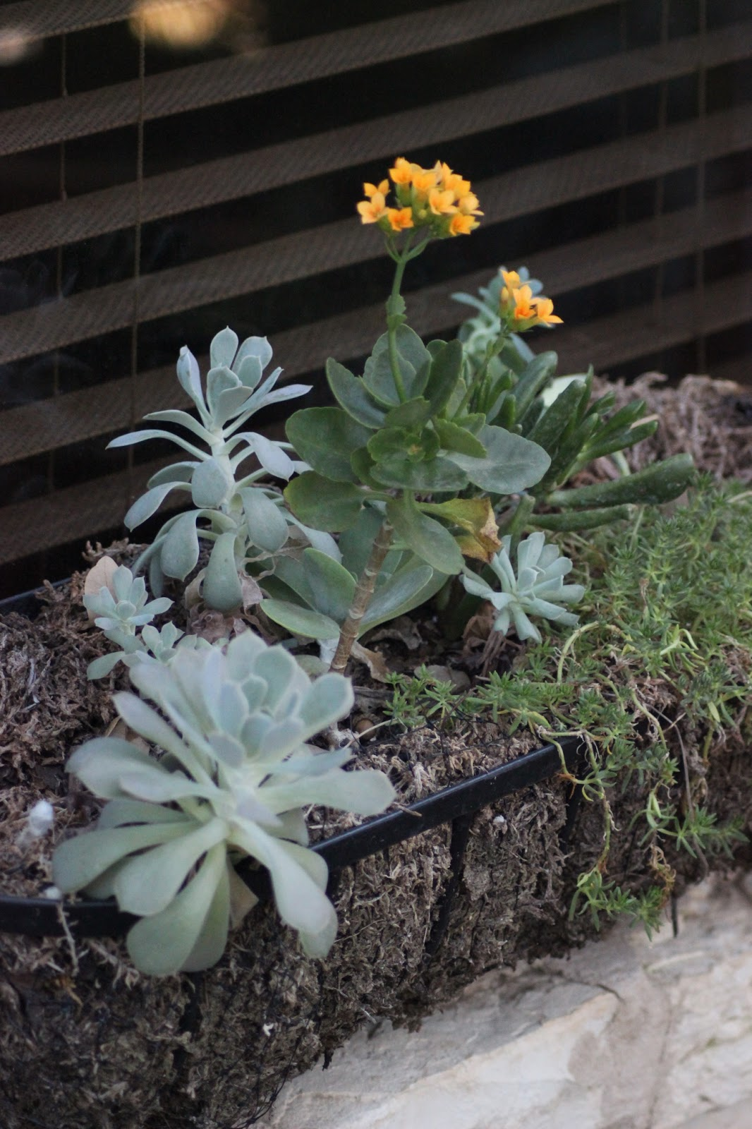 Rock Oak Deer Garden Blogger S Bloom Day February 2013