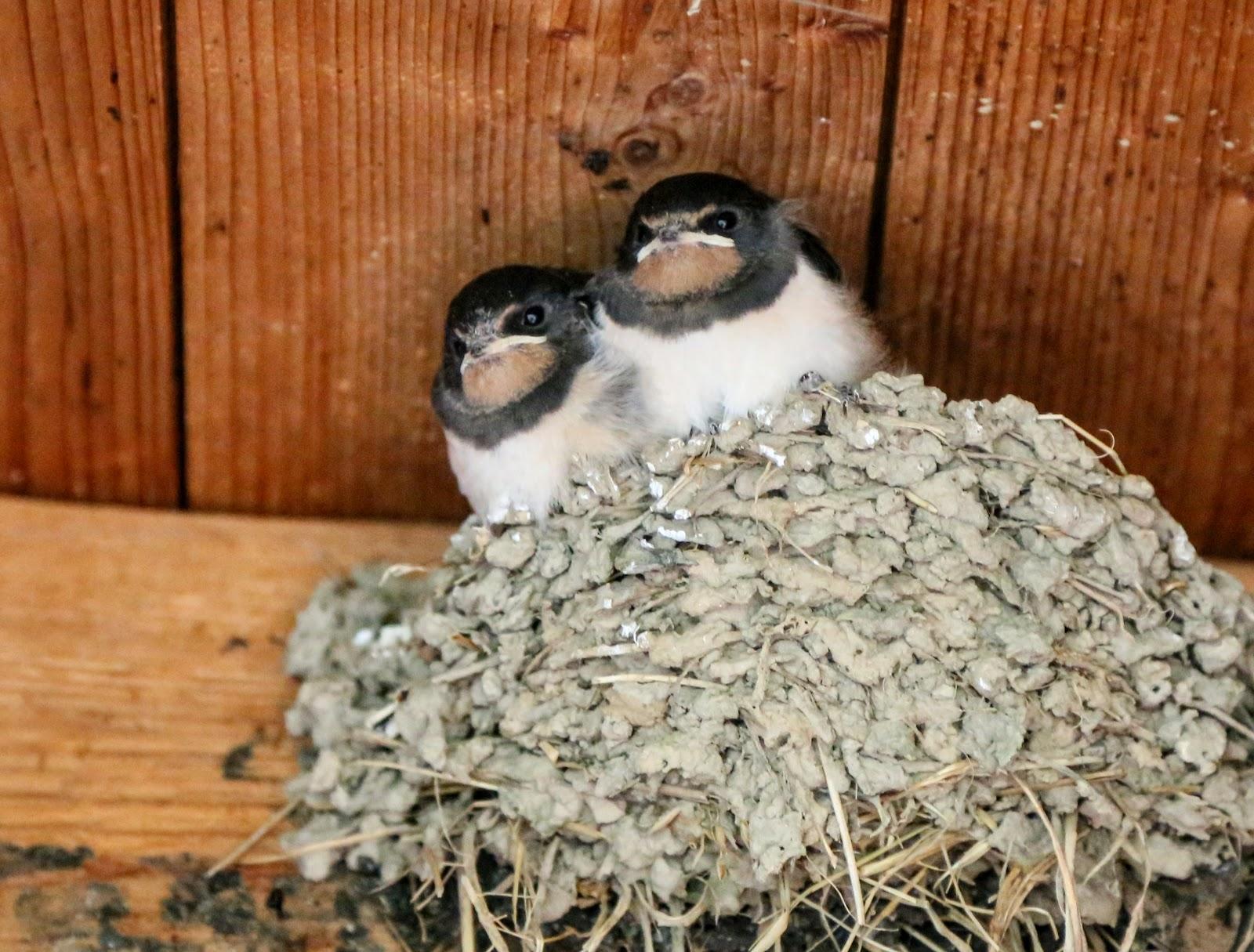 """[ bin ich der Einzige für den Beiden gucken wie Pinguine in """"Madagaskar"""" ]"""
